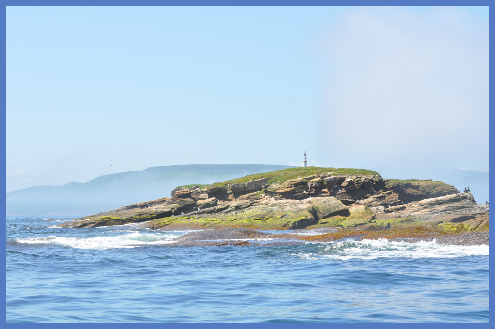 What You'll See - Puffin Boat Tours Cape Breton Nova Scotia