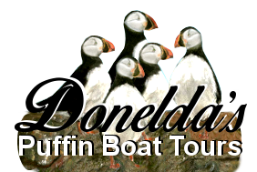 Puffin Boat Tours Cape Breton Nova Scotia